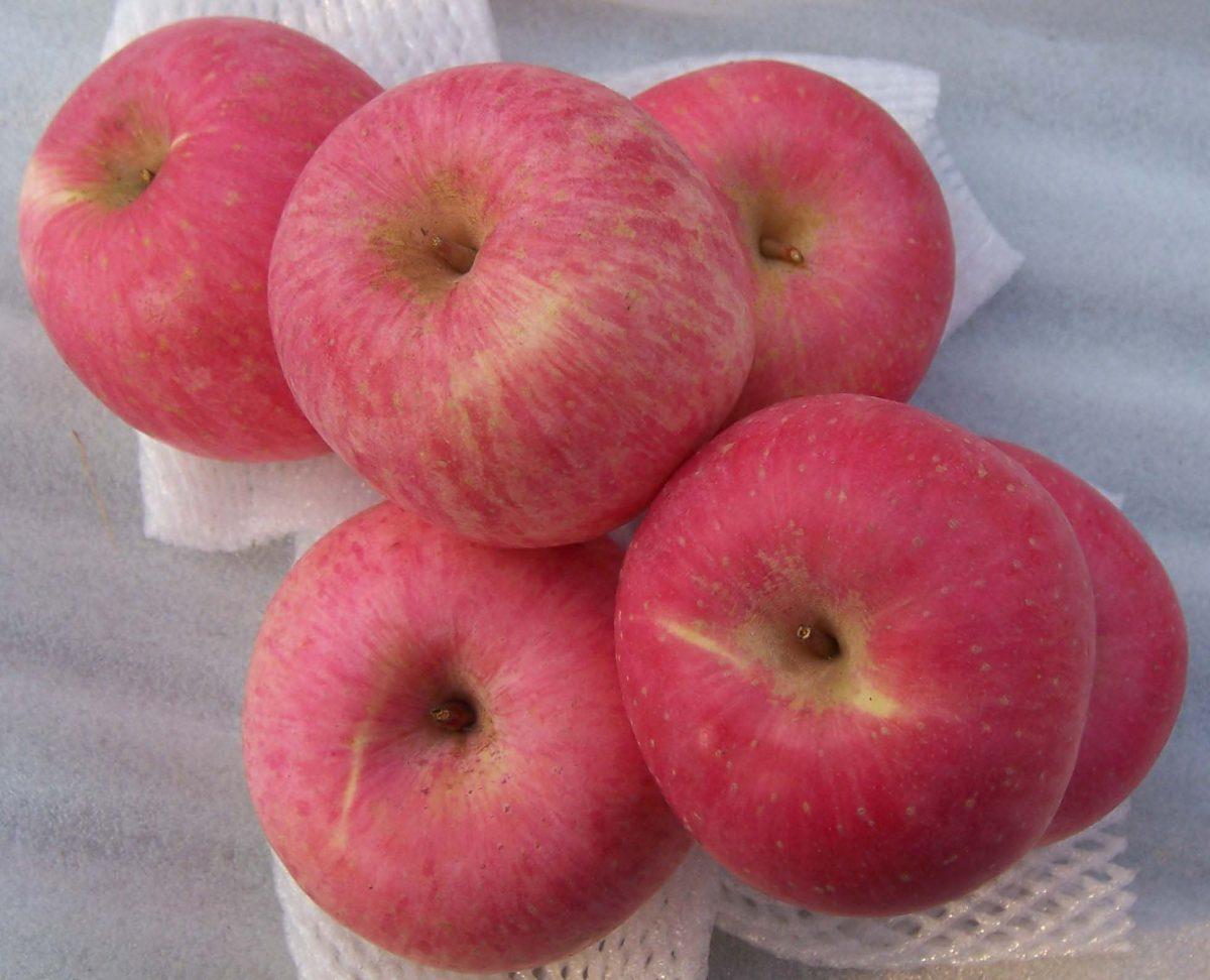 china fuji apple 6 pcs